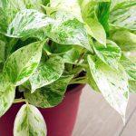 گیاهان خانگی مناسب برای هوای آلوده