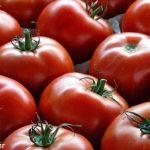 گوجه فرنگی، مفید یا مضر؟