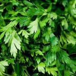 خواص درمانی سبزی جعفری