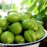 خواص گوجه سبز