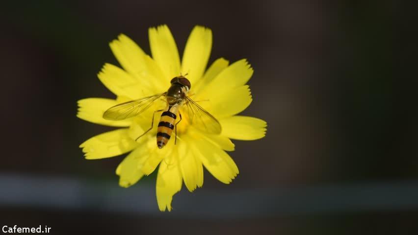 ۵ روش برای درمان نیش زنبور
