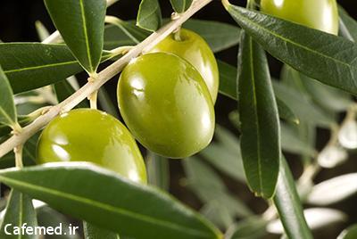 خواص روغن زیتون نسبت به سایر روغنهای گیاهی